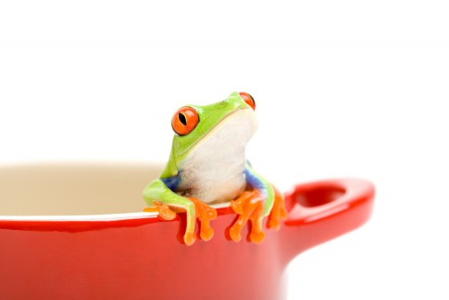 What Can Frogs Teach Us About Change?